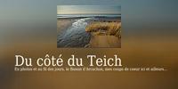 Blog du côté du Teich