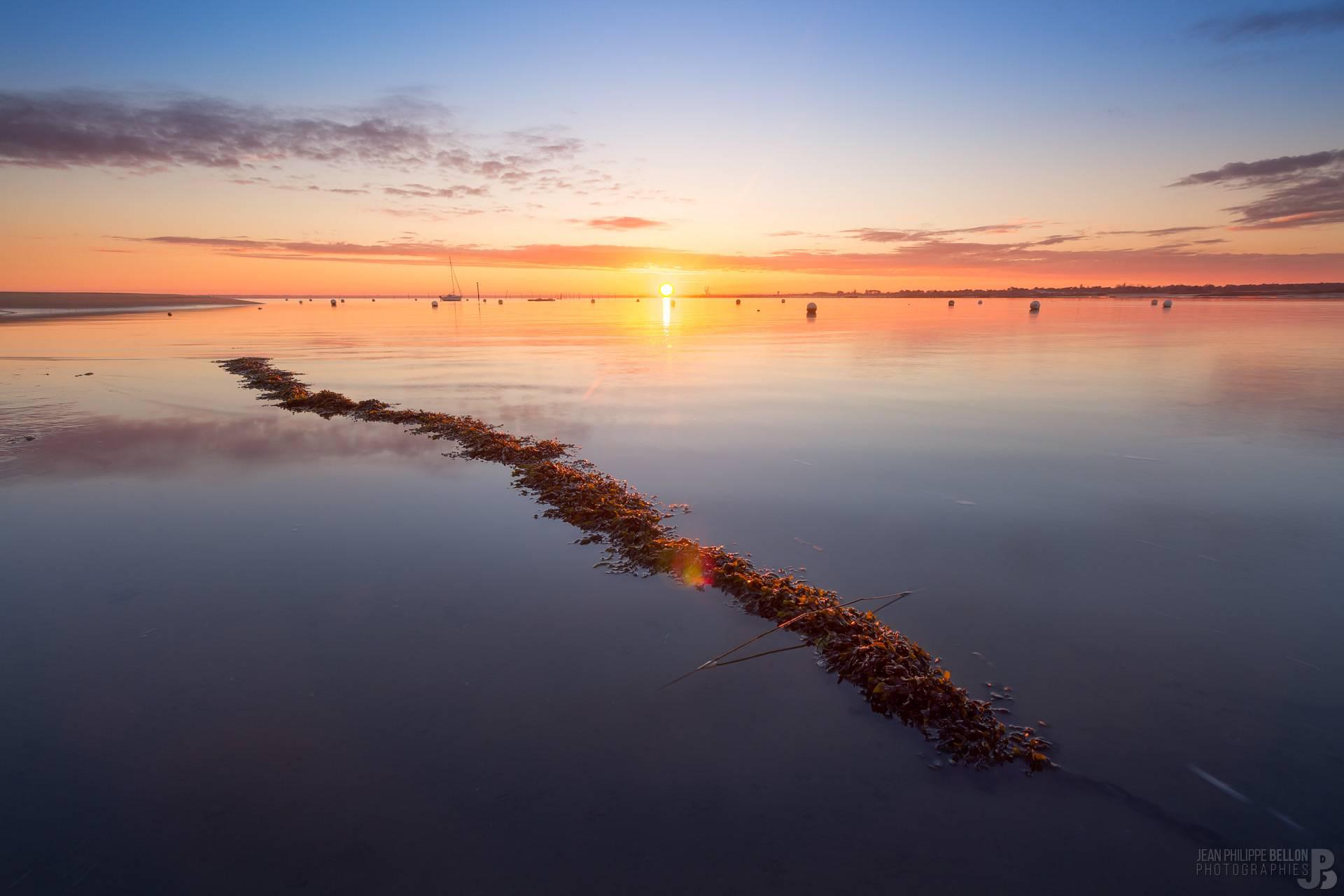 Chaine pleine d'algues au lever du soleil (Aiguillon)