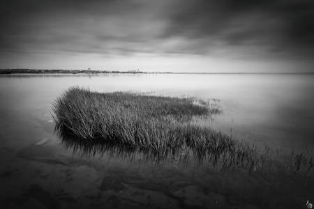 Photo de La Teste-de-Buch - Blac'grass