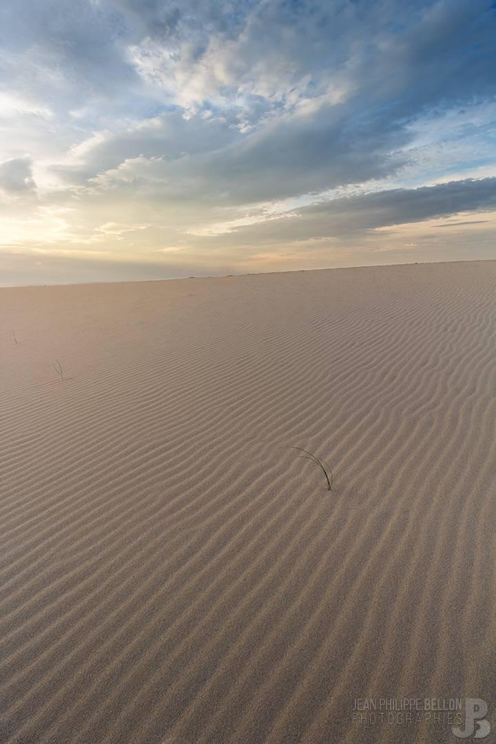 Brin d'herbe sur la Dune du Pilat